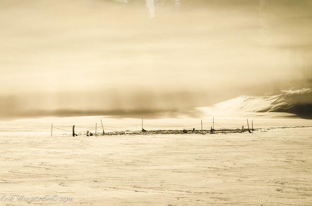 erikharstrom-Winter©2015-0116