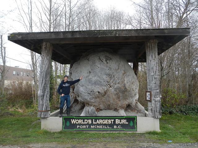 World's Largest Burl