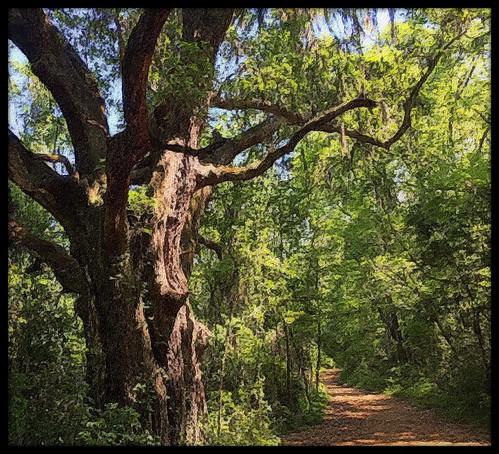 trees painterly tallahasseeflorida readerwalker brushstrokeipadapp