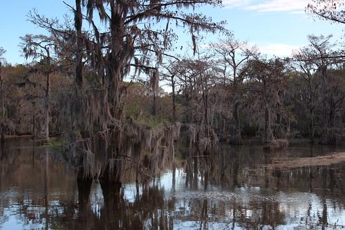 trees tree moss pond texas tx spanishmoss canoneos millpond caddolake baldcypress caddolakestatepark karnack sawmillpond karnacktexas