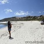 Viajefilos en Australia. Kangaroo 63