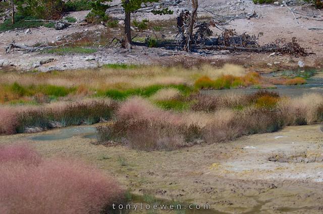 grass palette