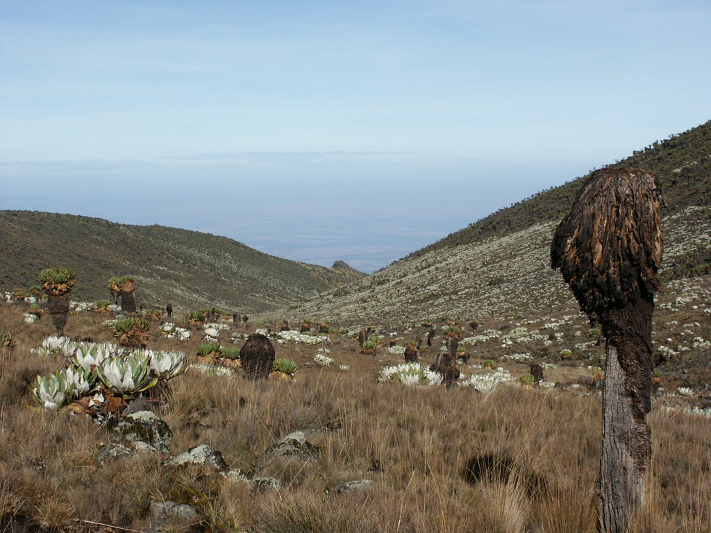 Looking towards the Kenyan plateau from the Teleki Valley.
