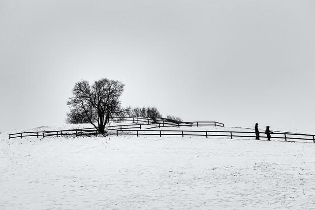 The Winter Garden II