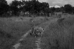 201504 - Zimbabwe - 0230.jpg
