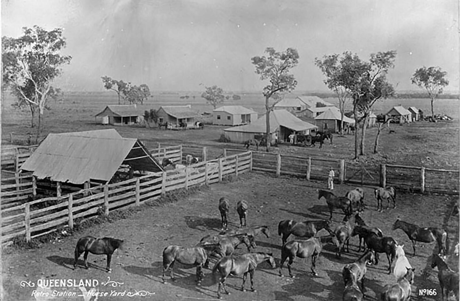 Australian Stock Horse - Horse Scanner