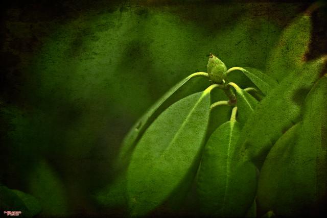 Within_The Secret Garden