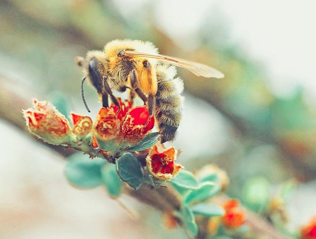 Ru-Bee