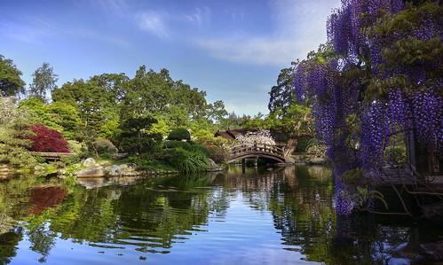 hakonegardens garden japanesegarden reflection waterreflection fuji wisteria bloom spring hdr 3xp raw selp1650 nex6 photomatix california saratoga fav200 day clear siliconvalley sanfranciscobay
