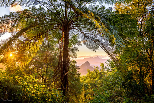 doughboyhill fern mtwarning newsouthwales nightcapnationalpark northernrivers shieldvolcano tweedrange wallsofjerusalemnationalpark wollumbin australia landscape sunset