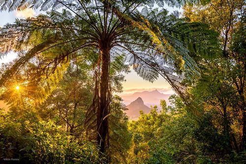 doughboyhill fern mtwarning newsouthwales nightcapnationalpark northernrivers shieldvolcano tweedrange wallsofjerusalemnationalpark wollumbin australia landscape sunset