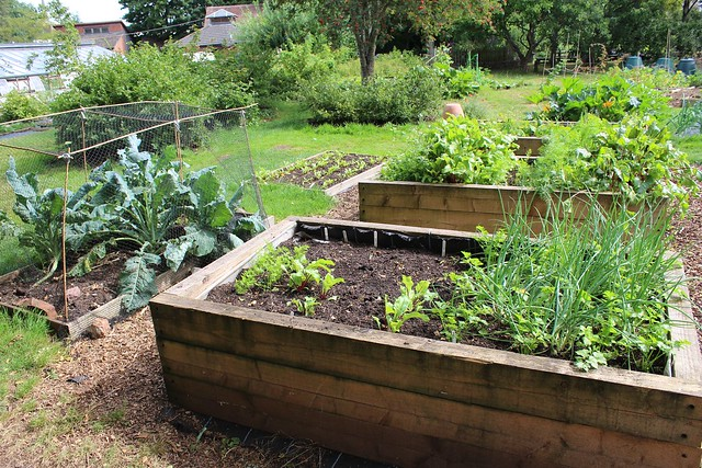 High raised beds in organic vegetable garden