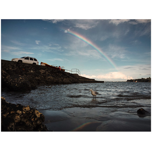takapunabeach beach rainbows rainbow seagull seabird sea car boat seashore life lifestyle