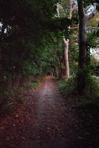 bellevue state park 1635mm f4l canon 5d mark iv landscape outdoors eos 5dmarkiv 5dm4 5dmk4 5d4 ef1635mmf4lisusm ef dusk sunset outside outdoor nature