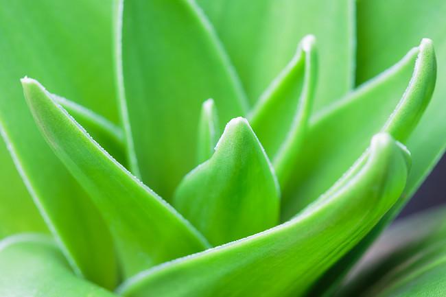Pflanzenmakros