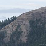 Petrified tree area on Specimen Ridge