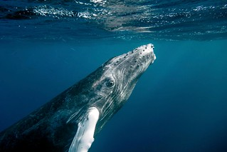 whale | by Christopher.Michel