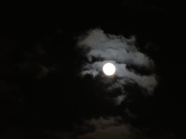 Mond, du weißt es, wo ich fehlgegangen und nicht der Liebling war der ich alles, alles danke, was ich im Leben mir errang, dir bringt mein Herz, das müde, kranke, der Lieder beste, die ich sang, wer weiß, wie bald auch ich schon wandere, hätte ich es gebracht 0007