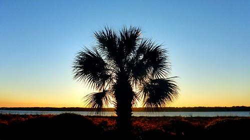 sunset sunrise sunsets palmtrees palmtree adamhall trackhead trackheadstudios trackheadxxx