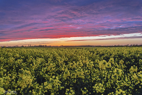 sunset red sun field yellow canon rapeseed sefton 550d