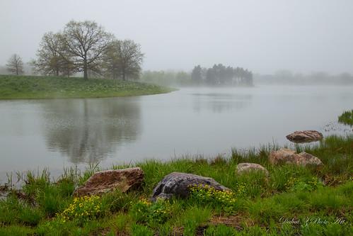 rain fog dew cbg chicagobotanicgarden cookcountyforestpreserve