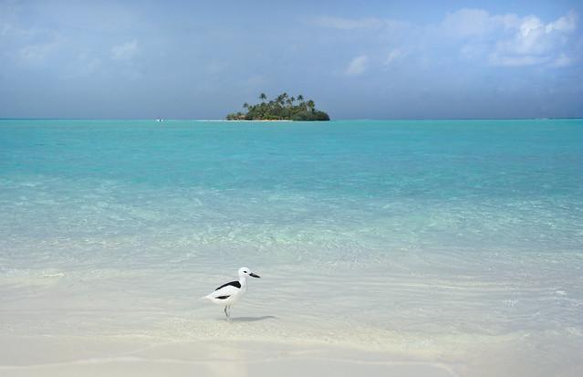 Juliette, the mascot of Rihiveli Beach Resort, Mahaanaelhihuraa Island, Maldives