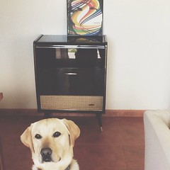 Como é?   #thenational #sadsongsfordirtylovers #labrador #raul #vinyl #vscocam #dog #prouddogowner #raulwantsbiscuits
