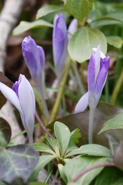 土, 2015-03-28 11:47 - Brooklyn Botanic Garden