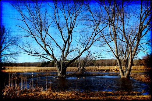 winter lake snow cold tree bird art nature water night photography geese duck day image farm meadow eden fowl feild groovyal winterslastday