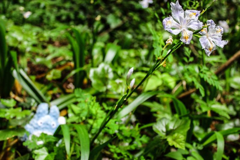 2014-05-05_01427_九州登山旅行.jpg
