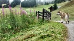 Schatzerhütte (233)