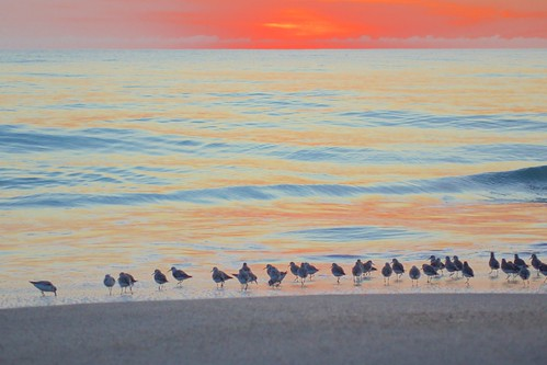 ocean beach sunrise dawn surf florida sandpipers indialantic
