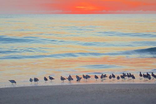 ocean beach sunrise dawn surf florida sandpipers indialantic