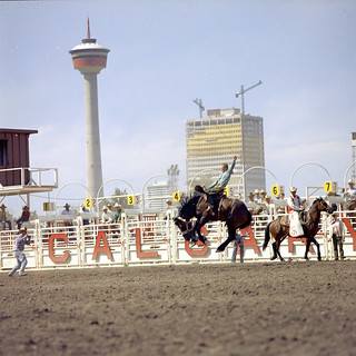 Bronco riding at the Calgary Stampede