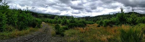 oregon tree farm beauty usa trees