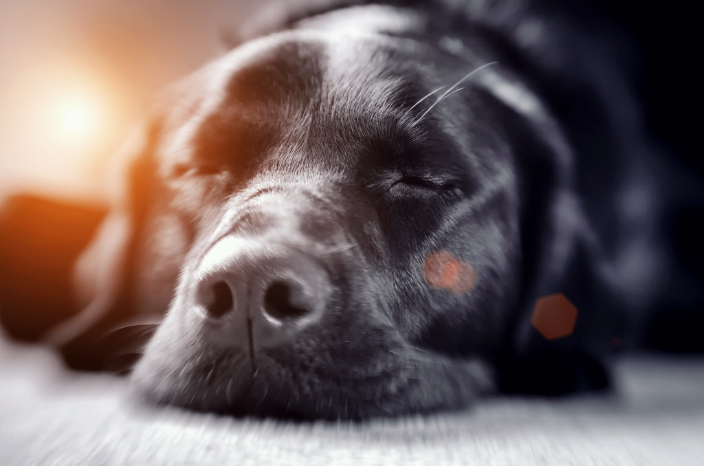 Dog. Tired.