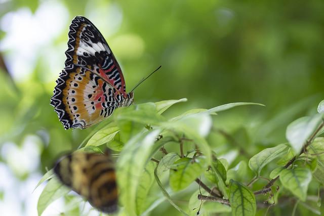 Butterfly Center_40