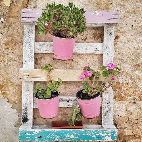 Pink and green #flowers #colorful #colors #wall #house #marzamemi #sicily #sicilia #igers #igersitalia #smooth #lovely #cute | by Mario De Carli