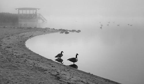 suomi finland helsinki herttoniemenranta sea goose geese shoreline outdoors mist scenery landscape fog air sky morning spo monochrome