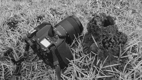 termites canon80d