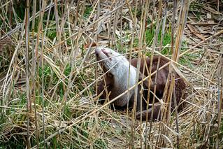 Otter   by ninfaj