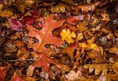 Mt Macedon Autumn Colours-8