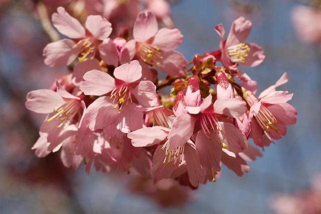 木, 2015-04-16 14:02 - Brooklyn Botanic Garden
