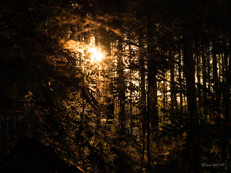 In the deep Finnish woods