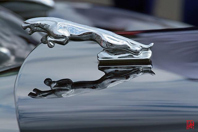 Jaguar.....une mascotte qui réfléchit bien