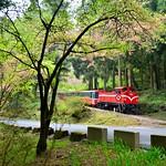 DAO-68744 嘉義縣,阿里山櫻花,阿里山,阿里山國家森林遊樂區,阿里山國家風景區,阿里山森林鐵道,櫻花鐵道,阿里山櫻花季,吉野櫻花季,森林火車,阿里山小火車