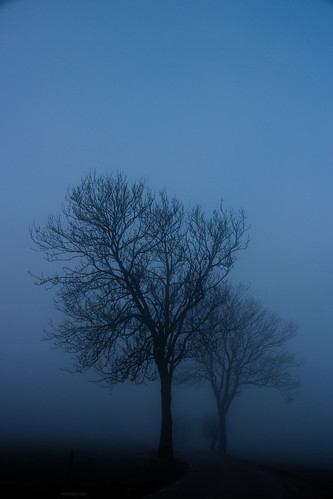 Silhouettes in the fog | by Infomastern