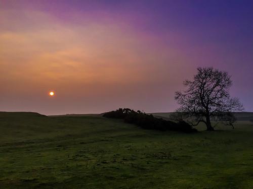 trees sunset sun grass clouds sunrise haze pastel fields colourful picturesque landscaoe