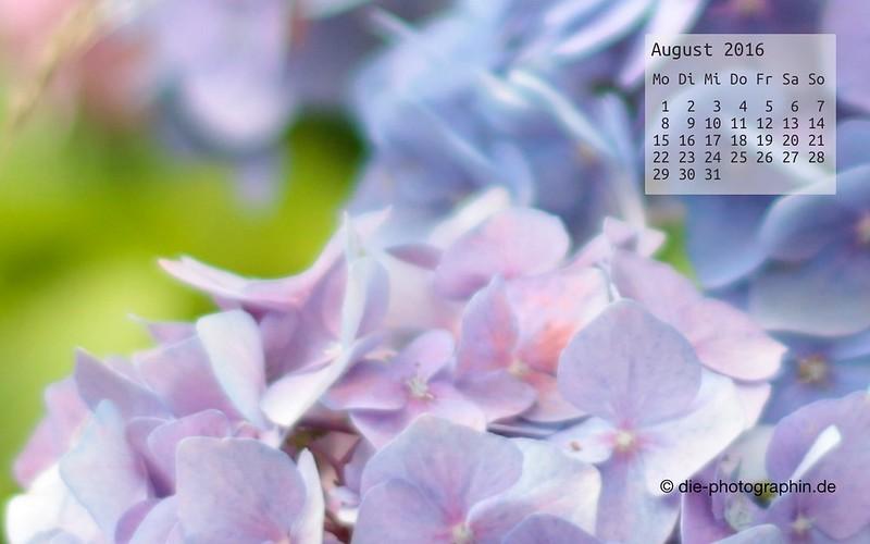 hortensie_august_kalender_die-photographin
