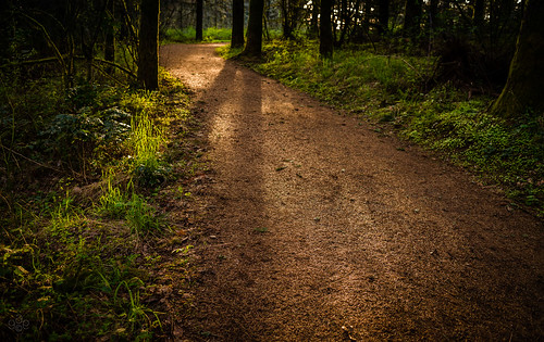 oregon unitedstates path beaverton fav20 trail fav30 fav10 fav40 coopermountainnaturepark tualatinvalleyparksandrecreation